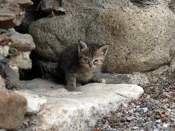 Rencontres chats animaux